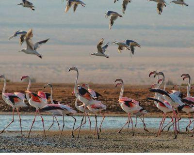 Hula-Valley-Bird-Festival und Eilat Birds Festival